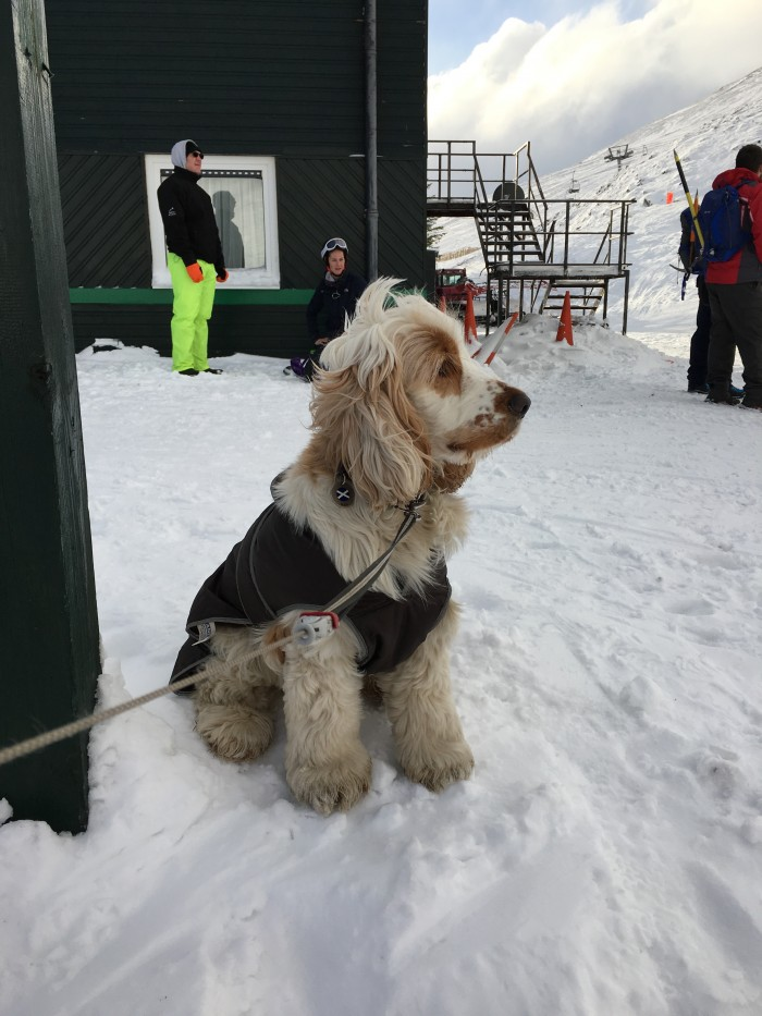 2 2 days of great skiing while Max the dog watched!